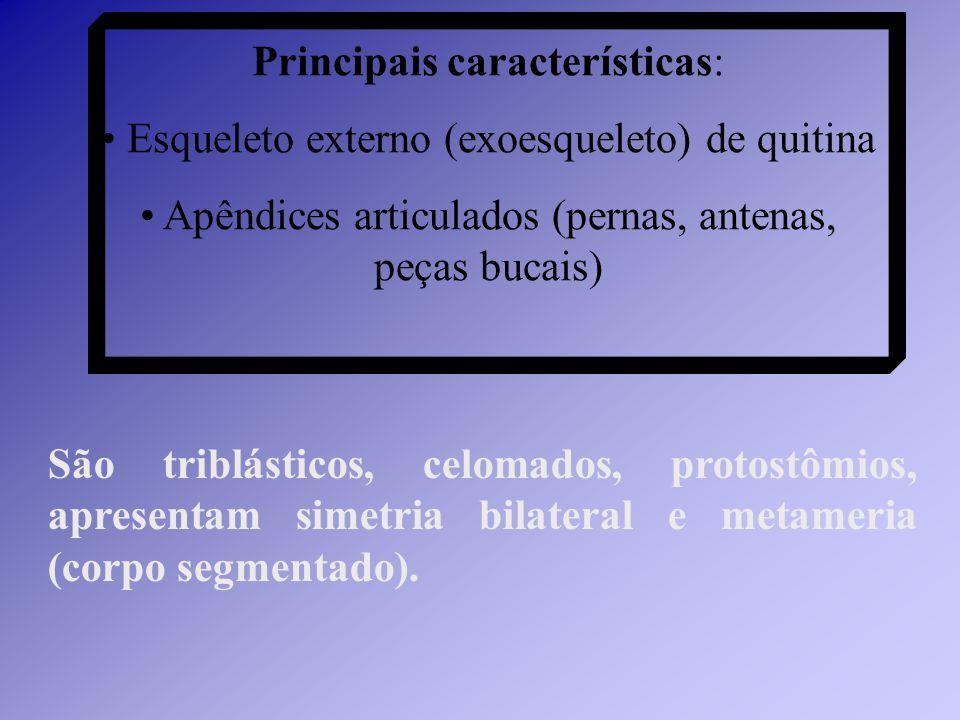 Classe Insecta (insetos).