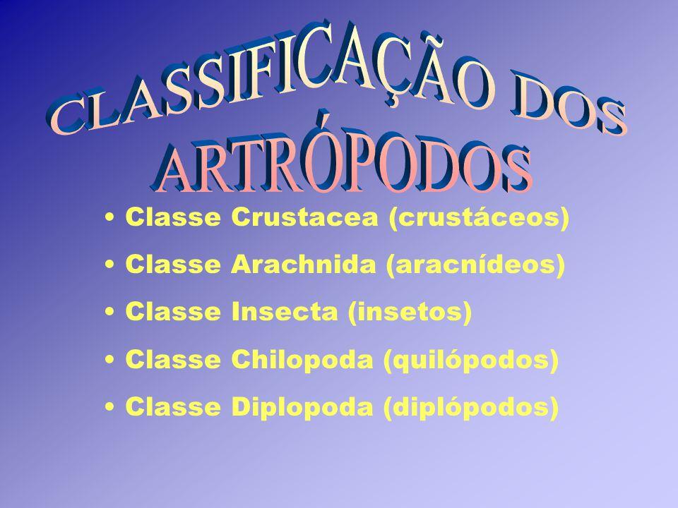 Classe Crustacea (crustáceos) Classe Arachnida (aracnídeos) Classe Insecta (insetos) Classe Chilopoda (quilópodos) Classe Diplopoda (diplópodos)