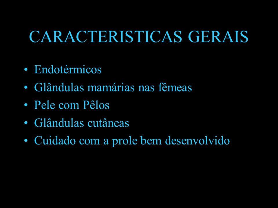 SISTEMA REPRODUTOR Dióicos.Fecundação interna Desenvolvimento direto e intrauterino.