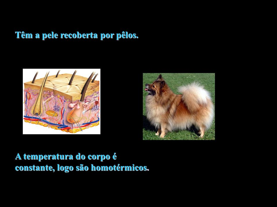 CORDADOS VERTEBRADOSVERTEBRADOS CLASSE MAMMALIA = É FORMADA POR ANIMAIS QUE POSSUEM GLÂNDULAS (MAMÁRIAS E SUDORÍPARAS).