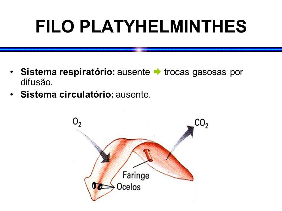 FILO PLATYHELMINTHES Sistema respiratório: ausente  trocas gasosas por difusão. Sistema circulatório: ausente.