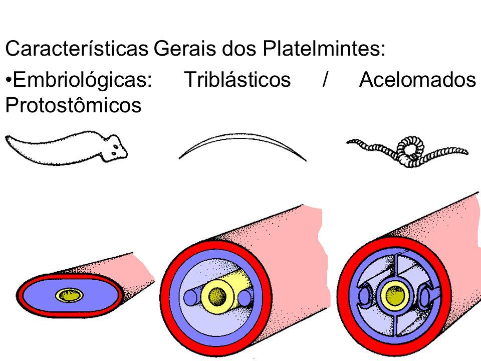 Características Gerais dos Platelmintes: Embriológicas: Triblásticos / Acelomados Protostômicos