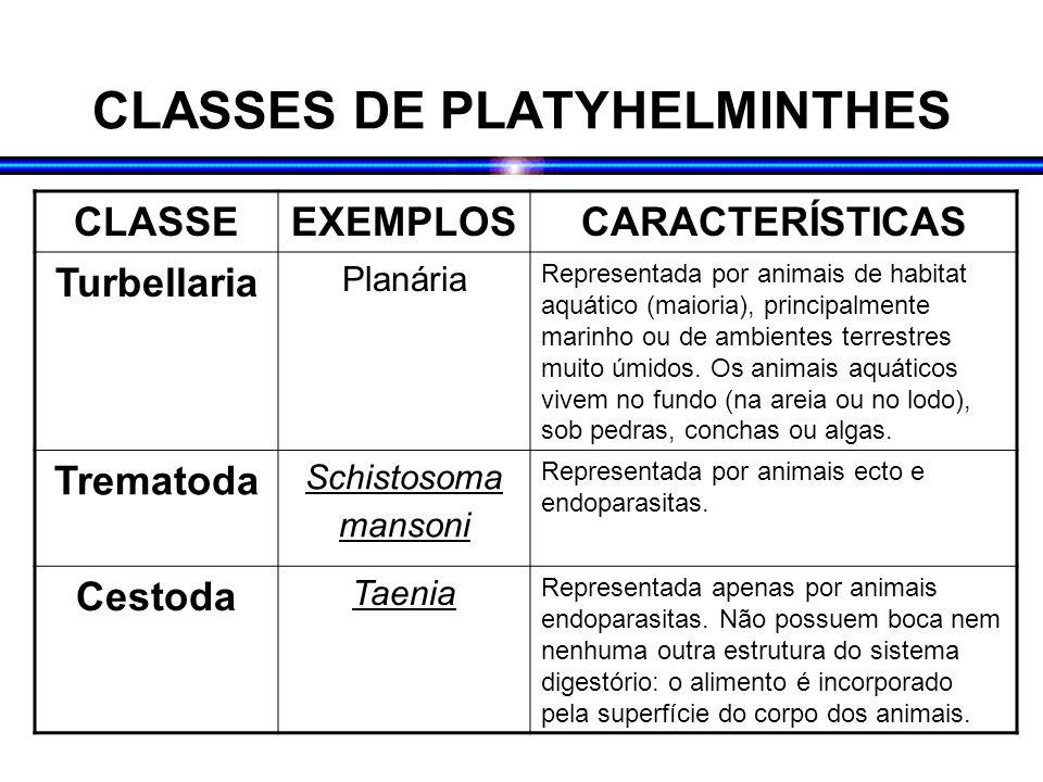CLASSES DE PLATYHELMINTHES CLASSEEXEMPLOSCARACTERÍSTICAS Turbellaria Planária Representada por animais de habitat aquático (maioria), principalmente m