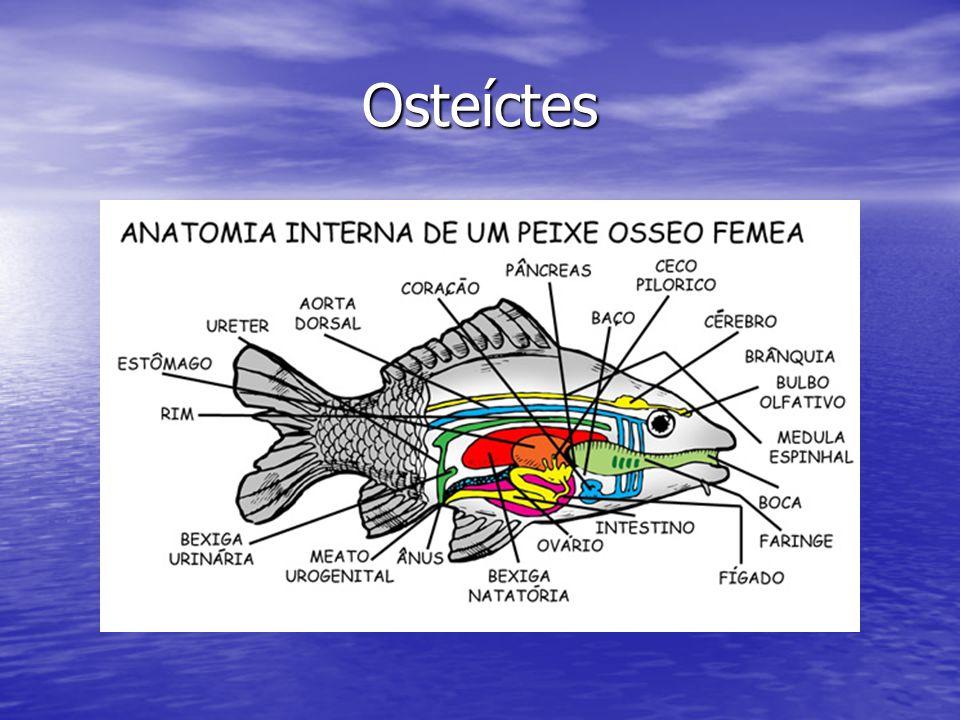 Osteíctes