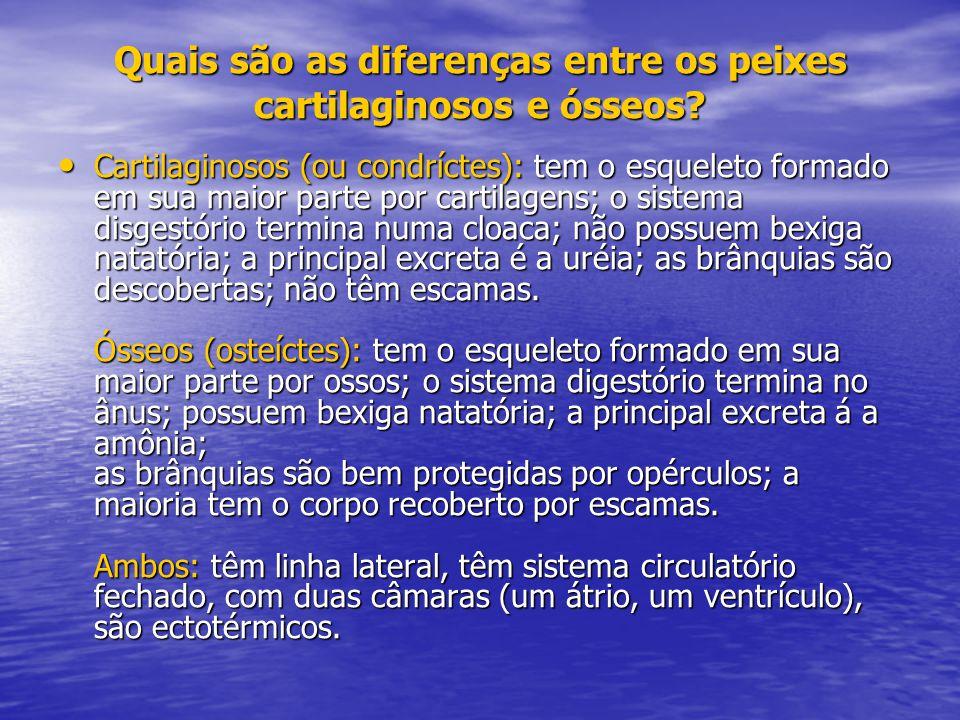 Quais são as diferenças entre os peixes cartilaginosos e ósseos? Cartilaginosos (ou condríctes): tem o esqueleto formado em sua maior parte por cartil