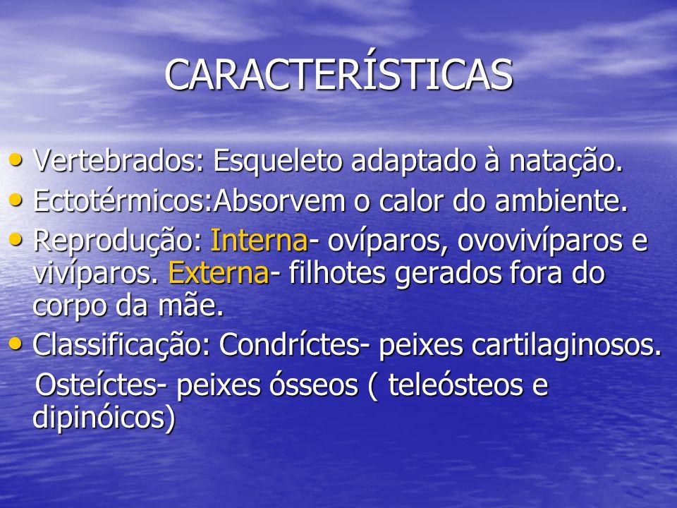 Condrictes