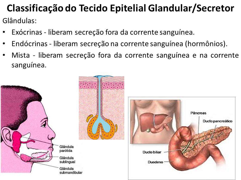 Glândulas: Exócrinas - liberam secreção fora da corrente sanguínea. Endócrinas - liberam secreção na corrente sanguínea (hormônios). Mista - liberam s
