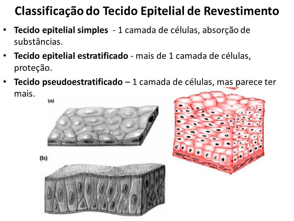 Classificação do Tecido Epitelial de Revestimento Tecido epitelial simples - 1 camada de células, absorção de substâncias. Tecido epitelial estratific