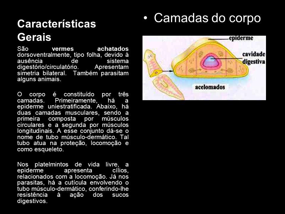 Características Gerais Camadas do corpo São vermes achatados dorsoventralmente, tipo folha, devido à ausência de sistema digestório/circulatório. Apre