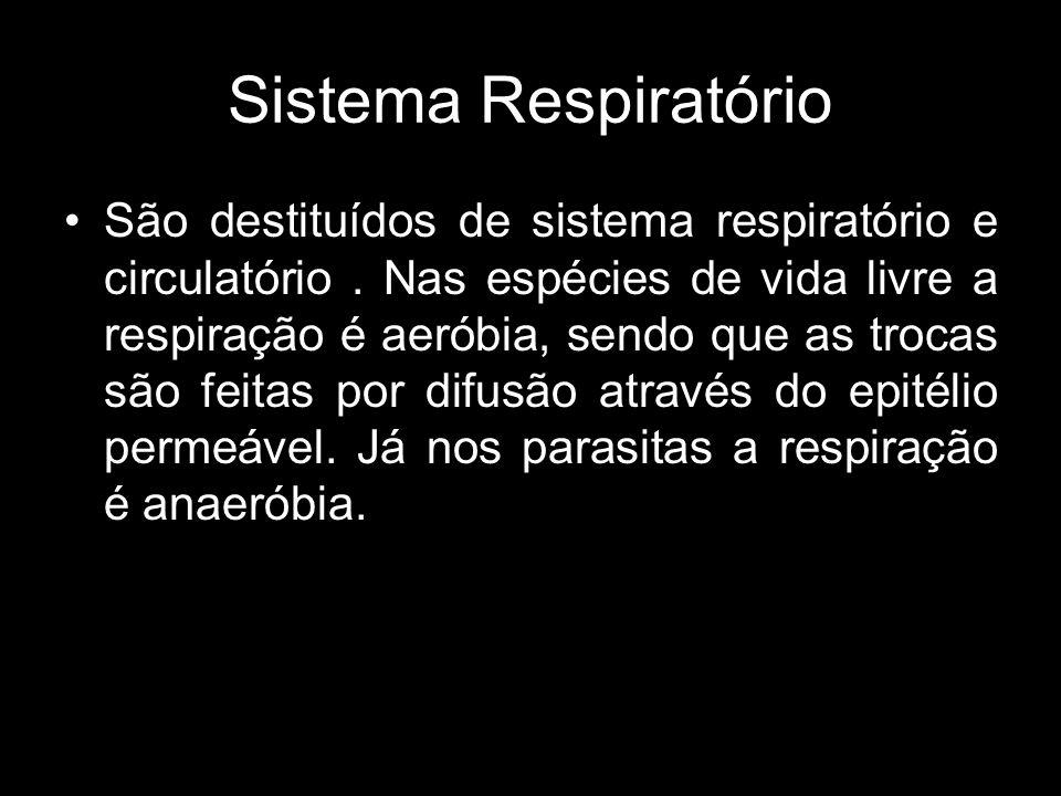 Sistema Respiratório São destituídos de sistema respiratório e circulatório. Nas espécies de vida livre a respiração é aeróbia, sendo que as trocas sã