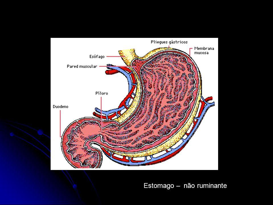 Estomago – não ruminante