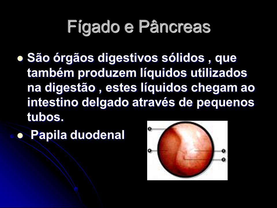 Fígado e Pâncreas São órgãos digestivos sólidos, que também produzem líquidos utilizados na digestão, estes líquidos chegam ao intestino delgado atrav