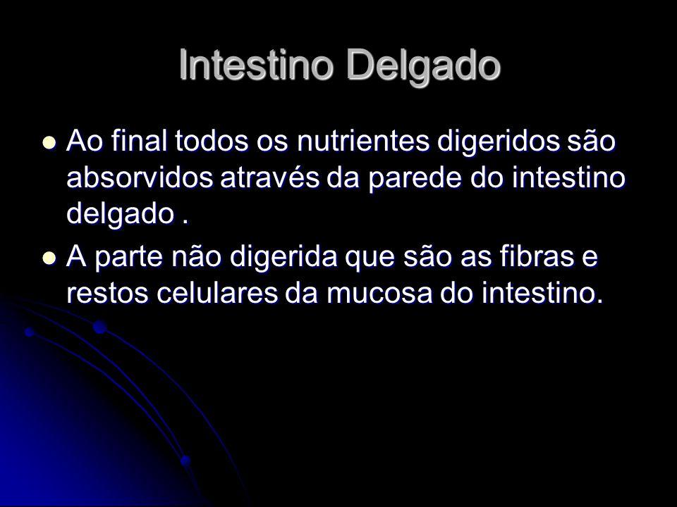 Intestino Delgado Ao final todos os nutrientes digeridos são absorvidos através da parede do intestino delgado. Ao final todos os nutrientes digeridos