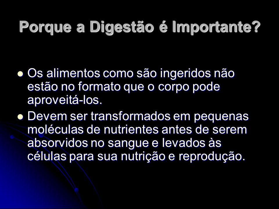 Porque a Digestão é Importante? Os alimentos como são ingeridos não estão no formato que o corpo pode aproveitá-los. Os alimentos como são ingeridos n