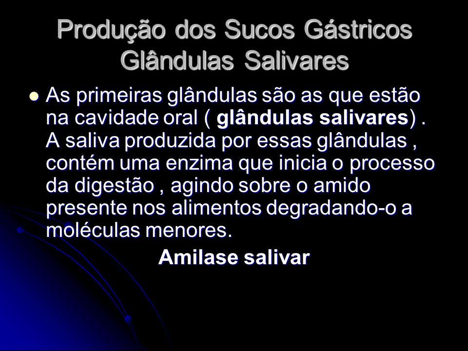 Produção dos Sucos Gástricos Glândulas Salivares As primeiras glândulas são as que estão na cavidade oral ( glândulas salivares). A saliva produzida p