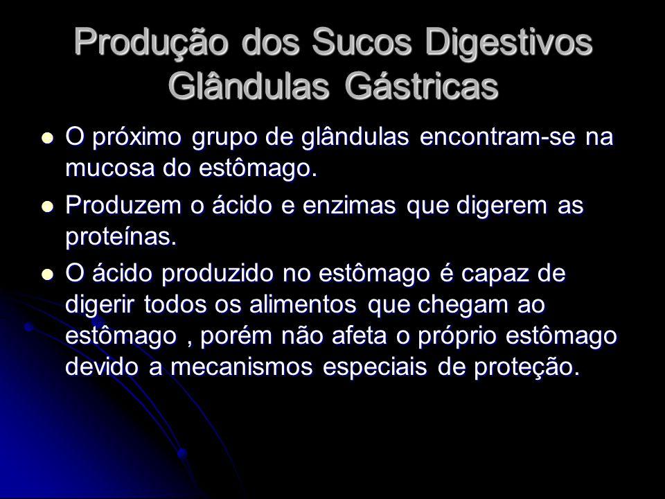 Produção dos Sucos Digestivos Glândulas Gástricas O próximo grupo de glândulas encontram-se na mucosa do estômago. O próximo grupo de glândulas encont