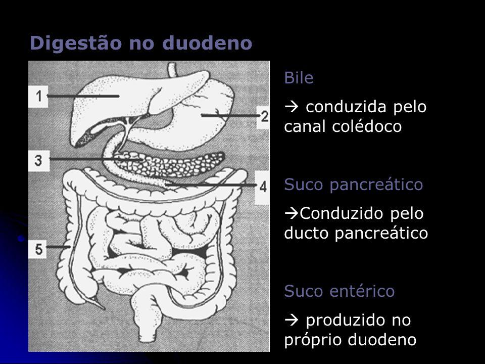 Digestão no duodeno Bile  conduzida pelo canal colédoco Suco pancreático  Conduzido pelo ducto pancreático Suco entérico  produzido no próprio duod