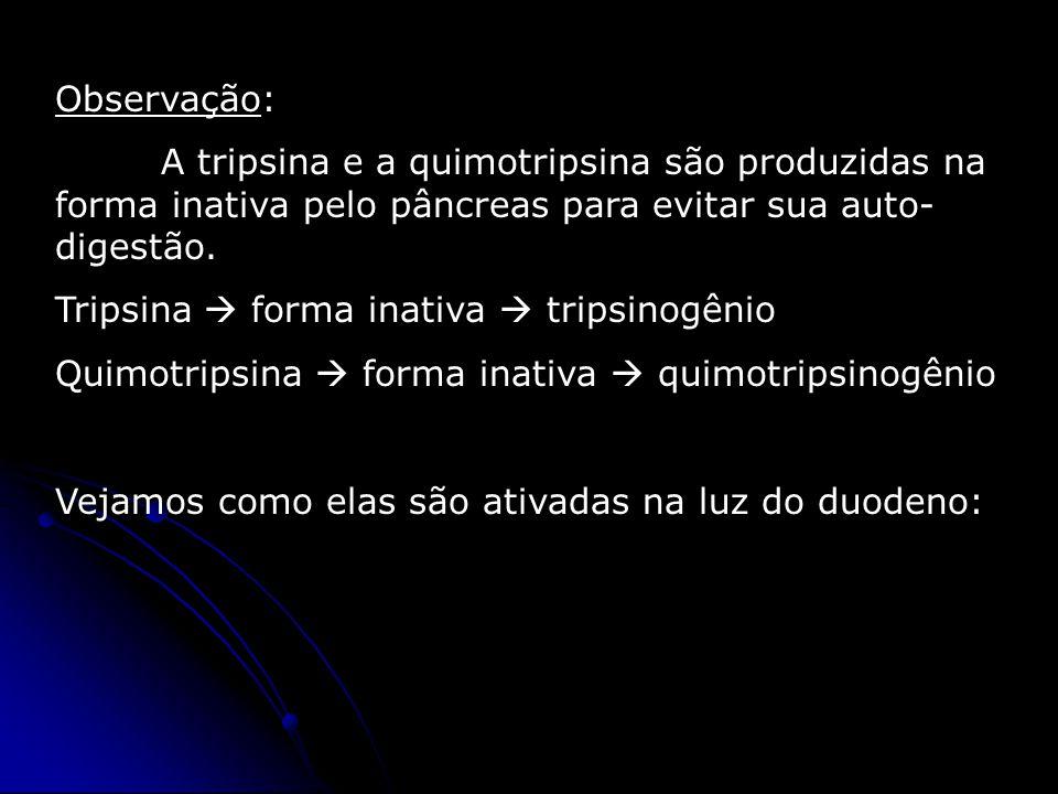 Observação: A tripsina e a quimotripsina são produzidas na forma inativa pelo pâncreas para evitar sua auto- digestão. Tripsina  forma inativa  trip