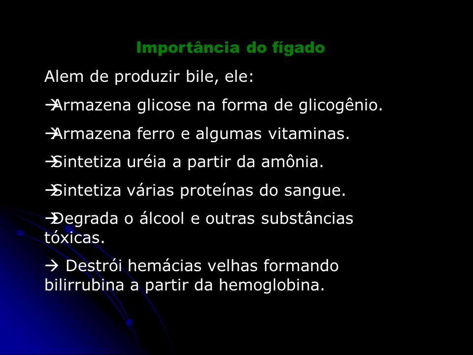 Importância do fígado Alem de produzir bile, ele:  Armazena glicose na forma de glicogênio.  Armazena ferro e algumas vitaminas.  Sintetiza uréia a