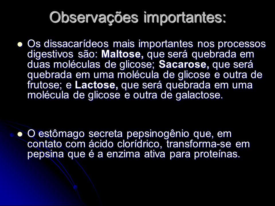 Observações importantes: Os dissacarídeos mais importantes nos processos digestivos são: Maltose, que será quebrada em duas moléculas de glicose; Saca