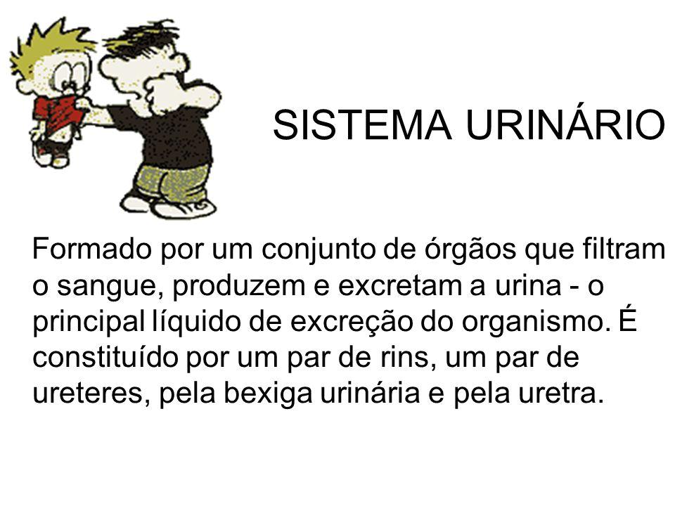 SISTEMA URINÁRIO Formado por um conjunto de órgãos que filtram o sangue, produzem e excretam a urina - o principal líquido de excreção do organismo.