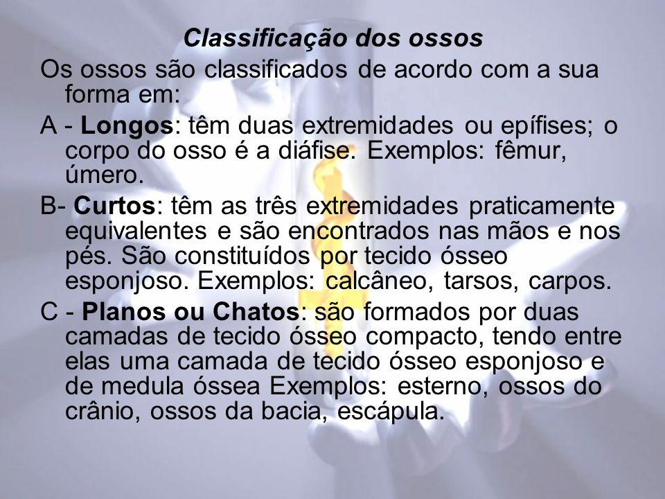 DIVISÃO DO SISTEMA NERVOSO COM BASE EM CRITÉRIOS ANATÕMICOS.