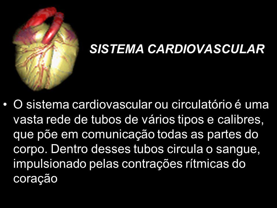 SISTEMA CARDIOVASCULAR O sistema cardiovascular ou circulatório é uma vasta rede de tubos de vários tipos e calibres, que põe em comunicação todas as partes do corpo.