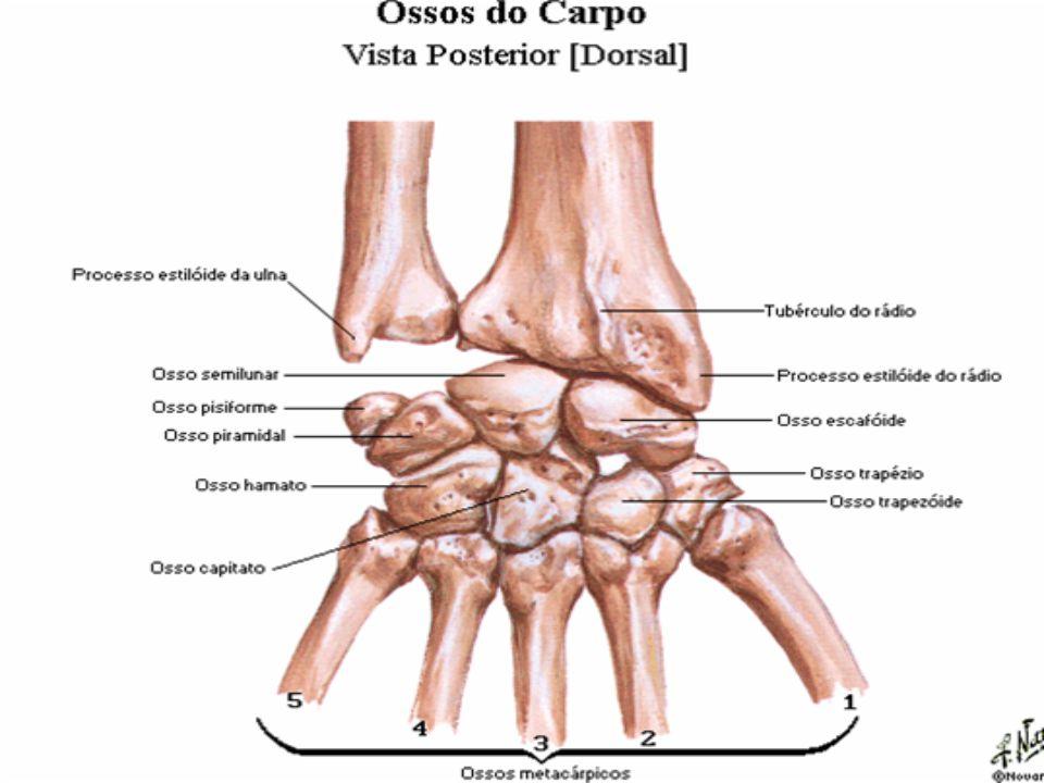 FEMININO É constituído por dois ovários, duas tubas uterinas (trompas de Falópio), um útero, uma vagina, uma vulva.