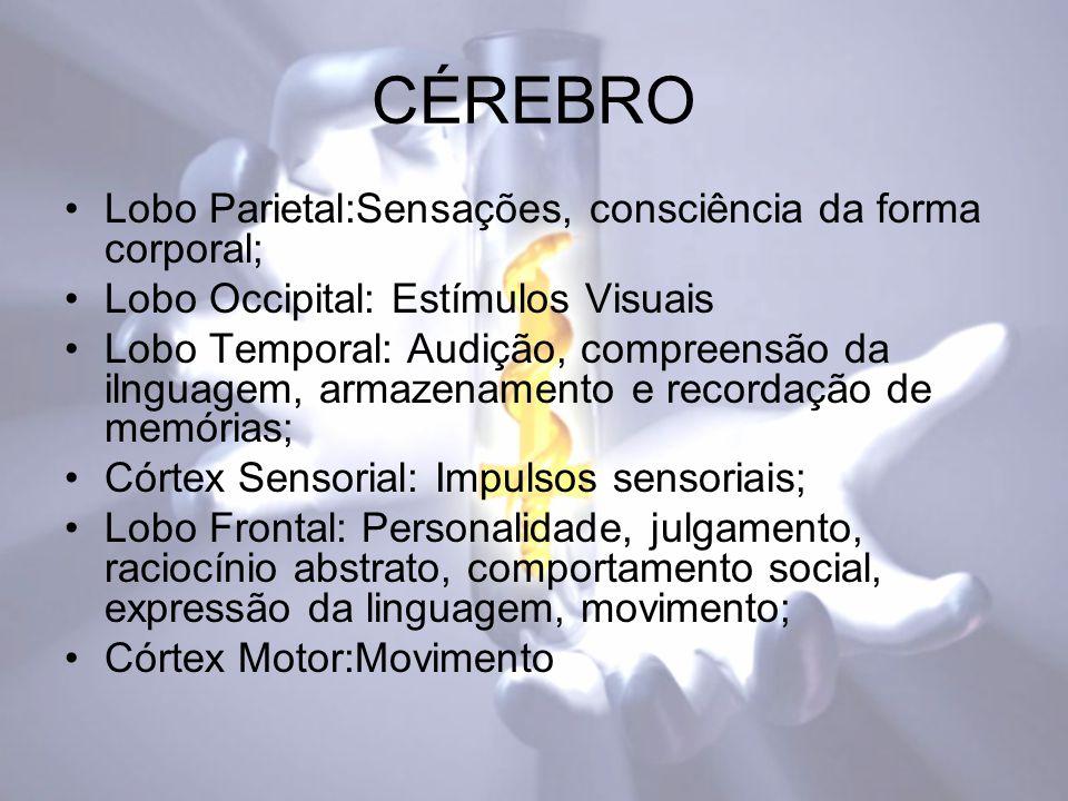 CÉREBRO Lobo Parietal:Sensações, consciência da forma corporal; Lobo Occipital: Estímulos Visuais Lobo Temporal: Audição, compreensão da ilnguagem, armazenamento e recordação de memórias; Córtex Sensorial: Impulsos sensoriais; Lobo Frontal: Personalidade, julgamento, raciocínio abstrato, comportamento social, expressão da linguagem, movimento; Córtex Motor:Movimento
