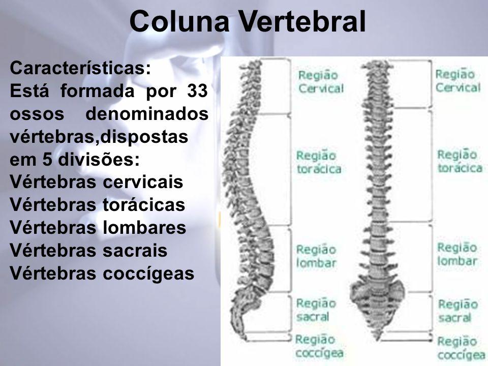 Características: Está formada por 33 ossos denominados vértebras,dispostas em 5 divisões: Vértebras cervicais Vértebras torácicas Vértebras lombares Vértebras sacrais Vértebras coccígeas Coluna Vertebral