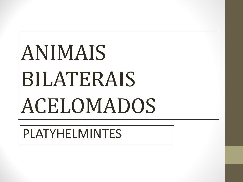 Platelmintos – Características Gerais Animais mais simples de simetria bilateral Acelomados – não possuem celoma Portanto: Bilaterais acelomados - Ectoderma - Mesoderma = parênquima ( tecido conjuntivo) Células e fibras - Endoderma