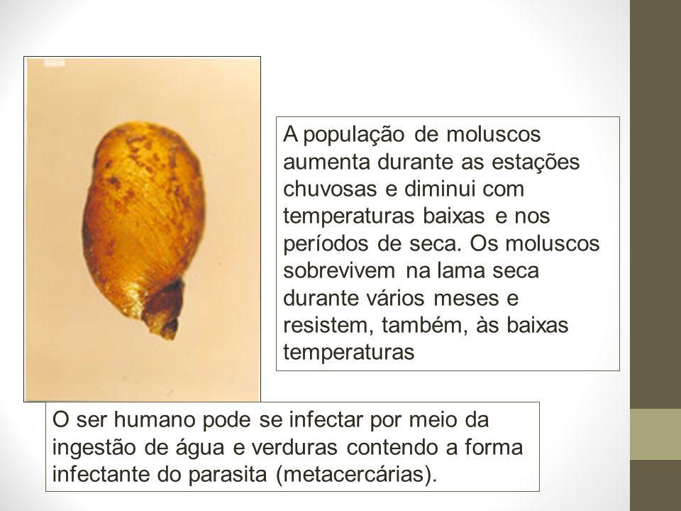 A população de moluscos aumenta durante as estações chuvosas e diminui com temperaturas baixas e nos períodos de seca.