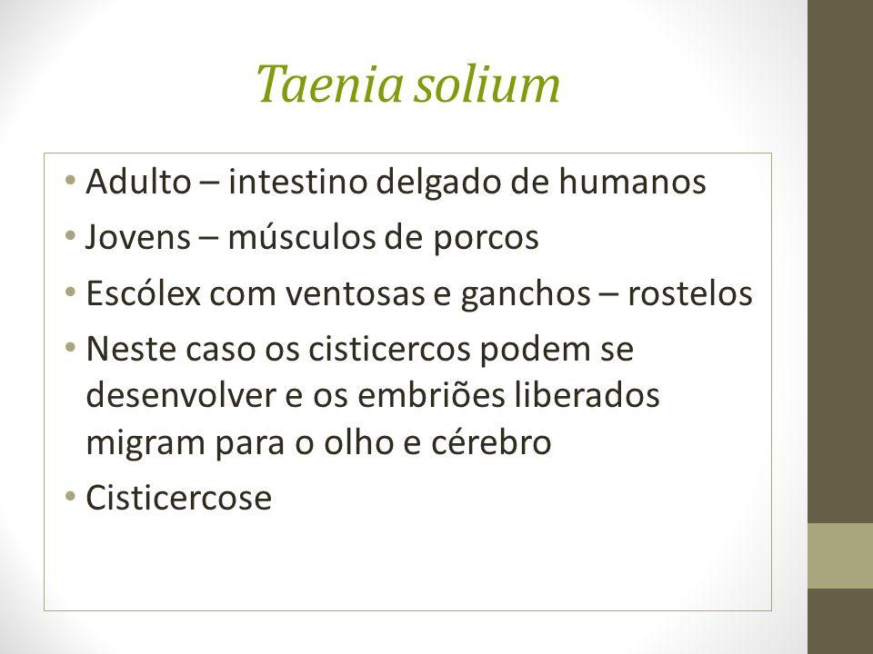 Taenia solium Adulto – intestino delgado de humanos Jovens – músculos de porcos Escólex com ventosas e ganchos – rostelos Neste caso os cisticercos podem se desenvolver e os embriões liberados migram para o olho e cérebro Cisticercose