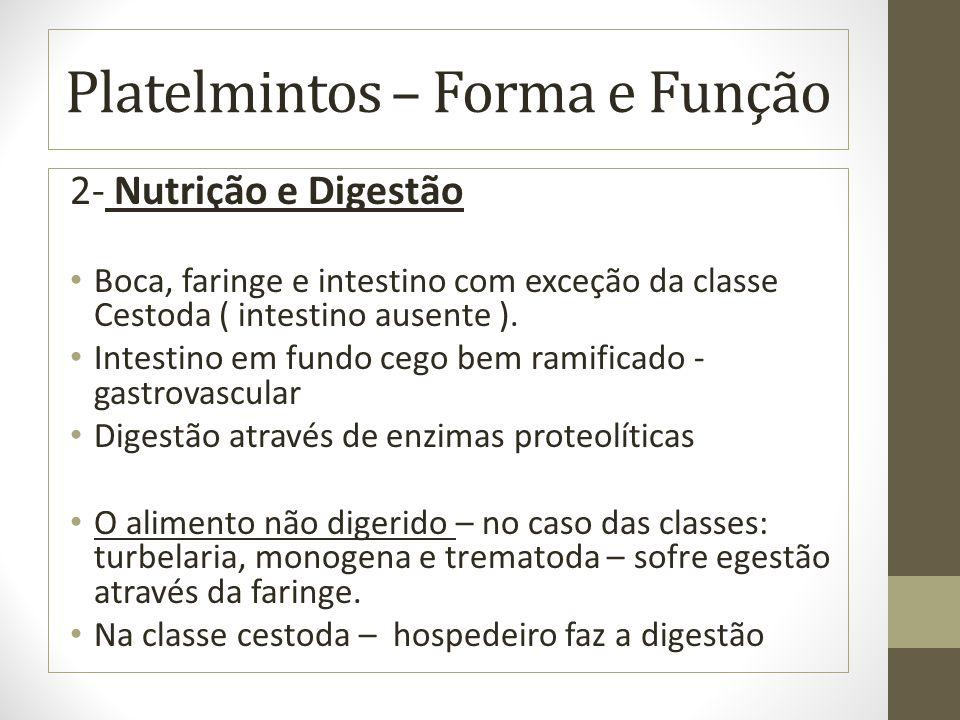 Platelmintos – Forma e Função 2- Nutrição e Digestão Boca, faringe e intestino com exceção da classe Cestoda ( intestino ausente ).
