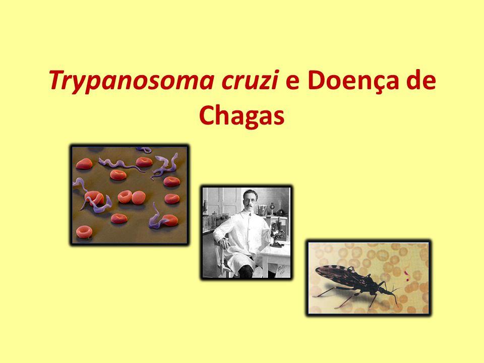 Casos Digestivos Esôfago: aumento do calibre; espessamento da parede muscular e destruição da inervação parassimpática.