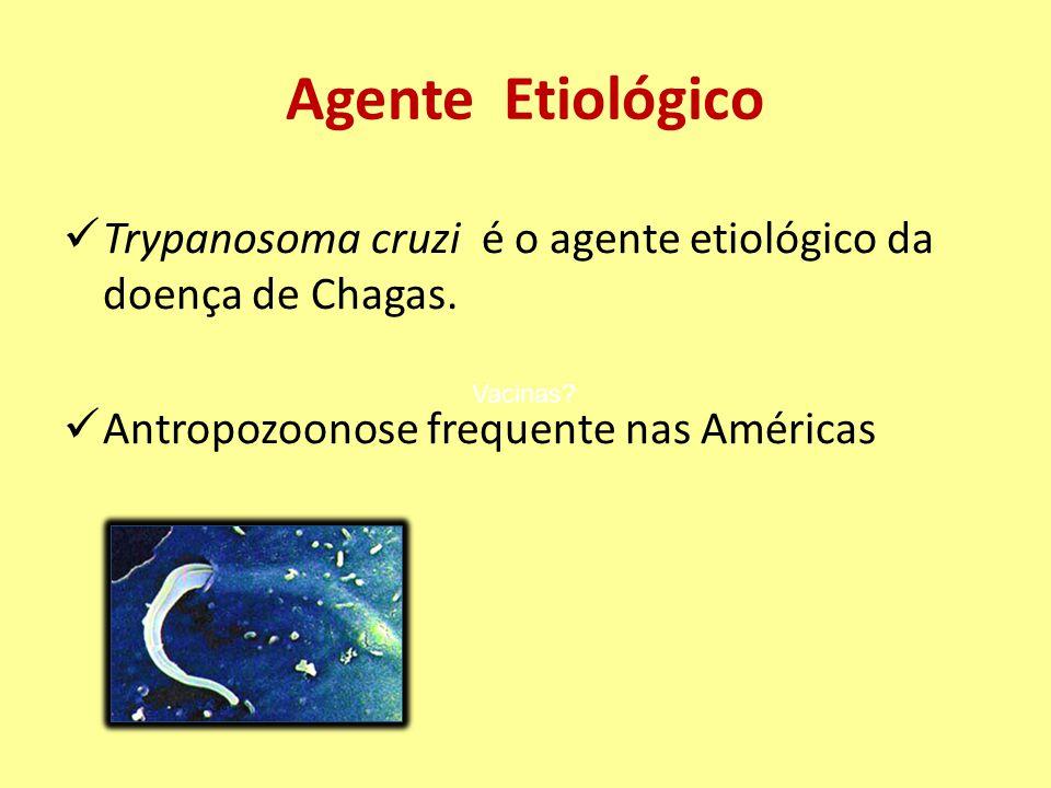 Agente Etiológico Trypanosoma cruzi é o agente etiológico da doença de Chagas. Antropozoonose frequente nas Américas Vacinas?