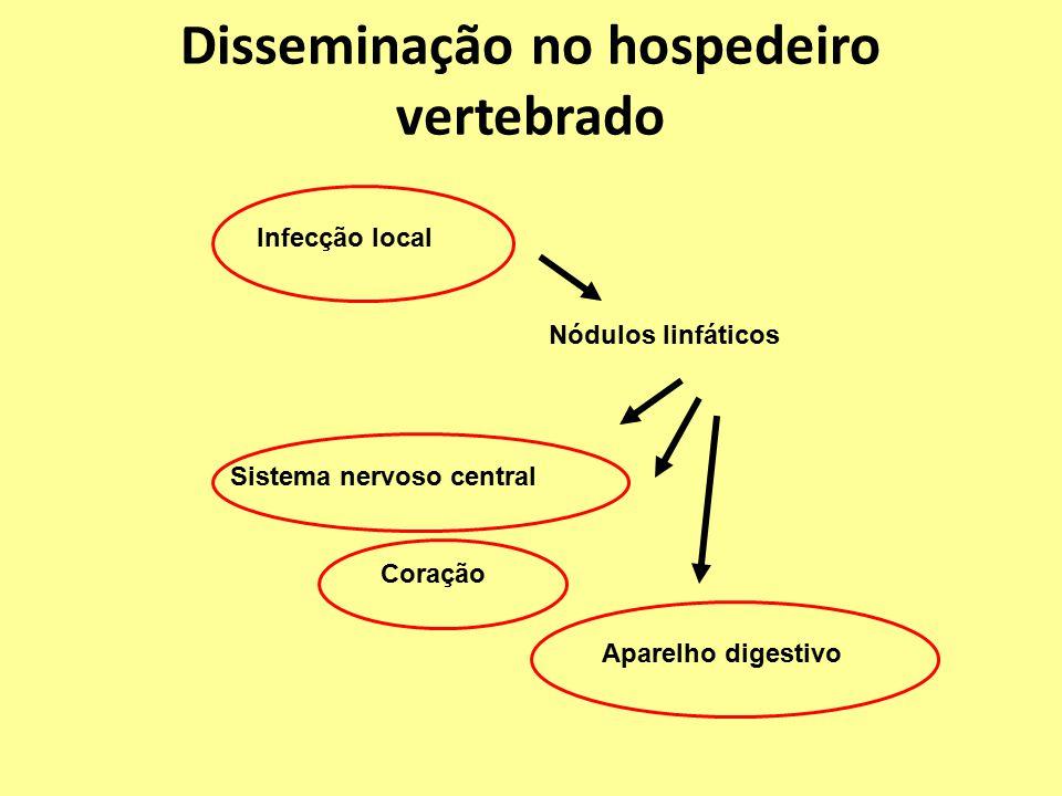 Disseminação no hospedeiro vertebrado Infecção local Nódulos linfáticos Sistema nervoso central Coração Aparelho digestivo