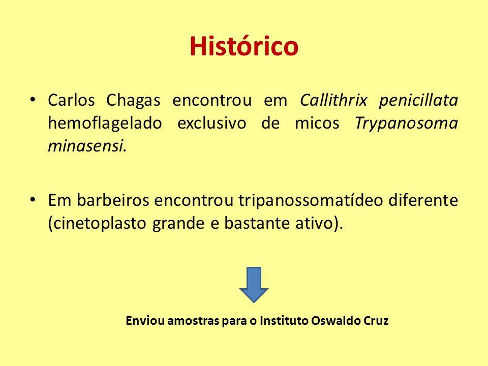 Histórico Carlos Chagas encontrou em Callithrix penicillata hemoflagelado exclusivo de micos Trypanosoma minasensi. Em barbeiros encontrou tripanossom