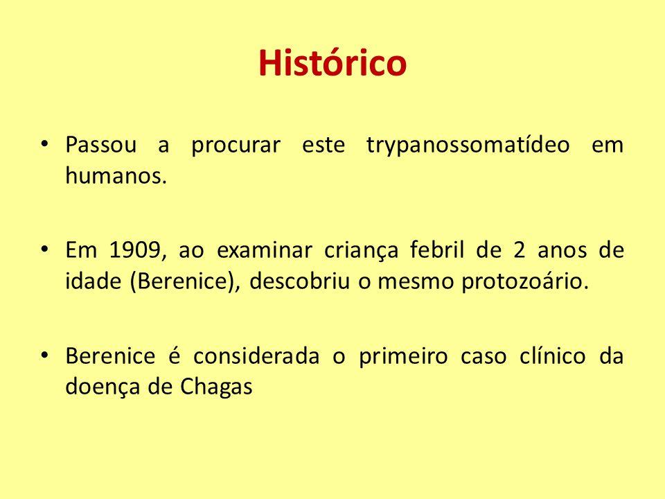 Alterações Anátomo e Fisiopatológicas Lesões em outros órgãos: Sistema nervoso central, fígado, baço, linfonodos (na fase aguda), músculos esqueléticos