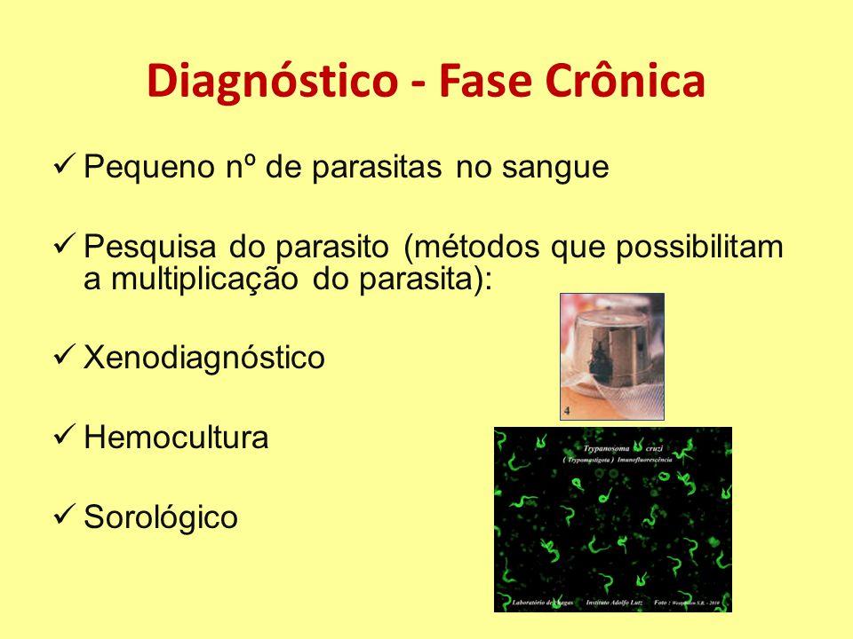 Diagnóstico - Fase Crônica Pequeno nº de parasitas no sangue Pesquisa do parasito (métodos que possibilitam a multiplicação do parasita): Xenodiagnóstico Hemocultura Sorológico