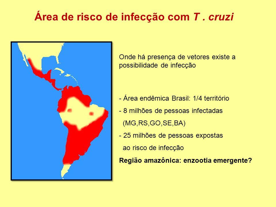 Área de risco de infecção com T. cruzi Onde há presença de vetores existe a possibilidade de infecção - Área endêmica Brasil: 1/4 território - 8 milhõ