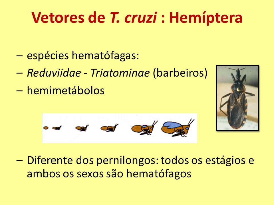 Vetores de T. cruzi : Hemíptera –espécies hematófagas: –Reduviidae - Triatominae (barbeiros) –hemimetábolos –Diferente dos pernilongos: todos os estág