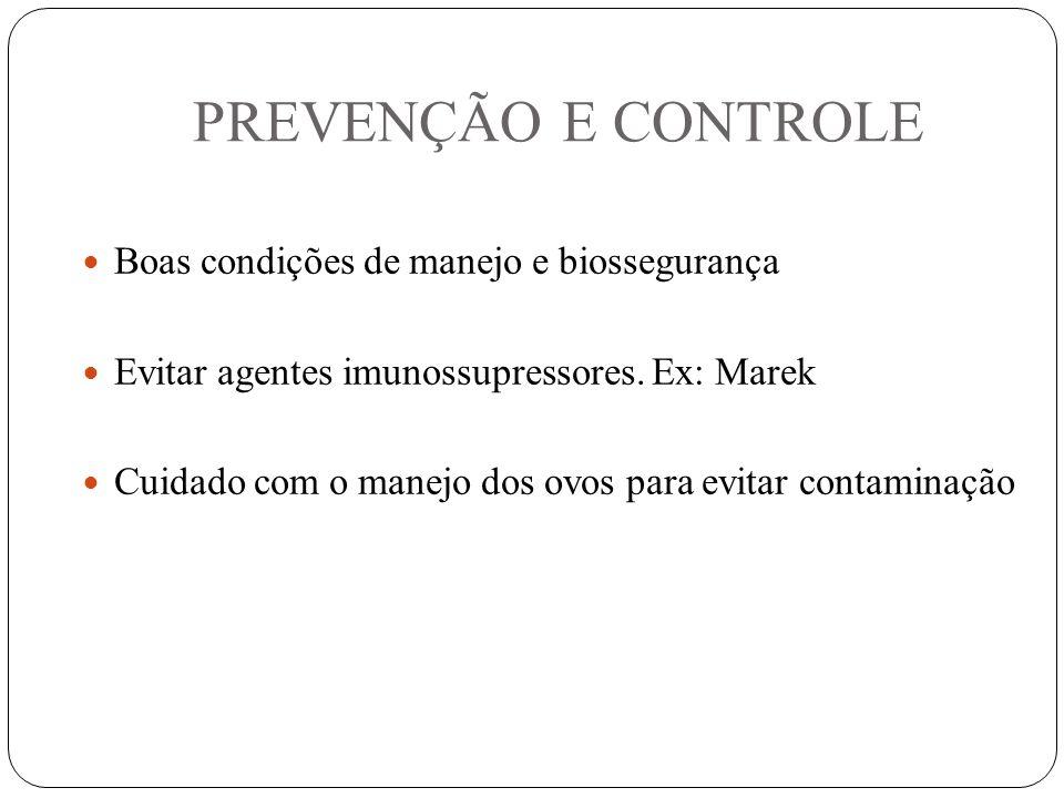 PREVENÇÃO E CONTROLE Boas condições de manejo e biossegurança Evitar agentes imunossupressores.
