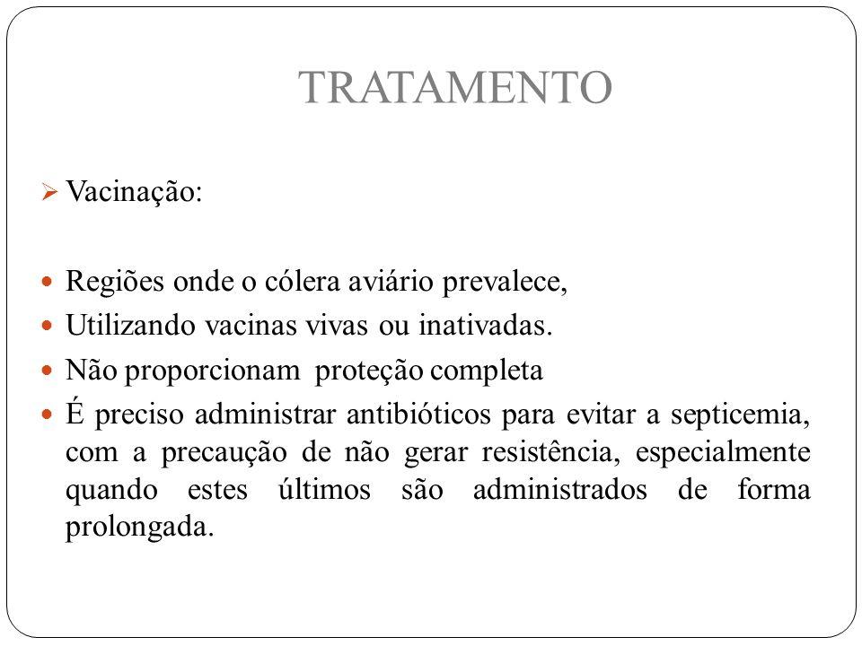 TRATAMENTO  Vacinação: Regiões onde o cólera aviário prevalece, Utilizando vacinas vivas ou inativadas.