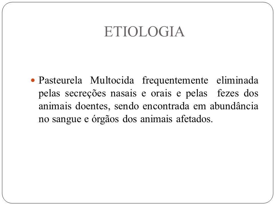 ETIOLOGIA Pasteurela Multocida frequentemente eliminada pelas secreções nasais e orais e pelas fezes dos animais doentes, sendo encontrada em abundância no sangue e órgãos dos animais afetados.