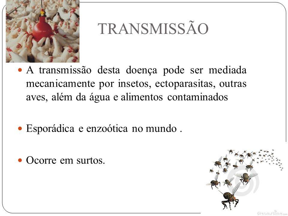TRANSMISSÃO A transmissão desta doença pode ser mediada mecanicamente por insetos, ectoparasitas, outras aves, além da água e alimentos contaminados Esporádica e enzoótica no mundo.