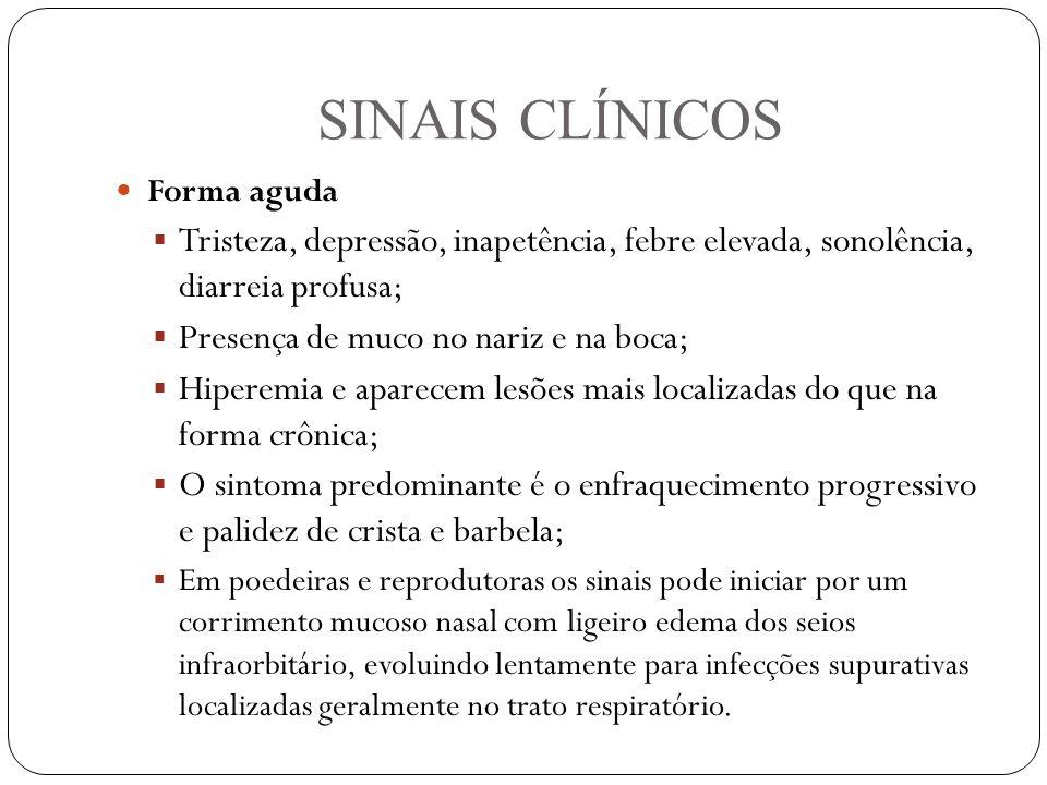 SINAIS CLÍNICOS Forma aguda  Tristeza, depressão, inapetência, febre elevada, sonolência, diarreia profusa;  Presença de muco no nariz e na boca;  Hiperemia e aparecem lesões mais localizadas do que na forma crônica;  O sintoma predominante é o enfraquecimento progressivo e palidez de crista e barbela;  Em poedeiras e reprodutoras os sinais pode iniciar por um corrimento mucoso nasal com ligeiro edema dos seios infraorbitário, evoluindo lentamente para infecções supurativas localizadas geralmente no trato respiratório.