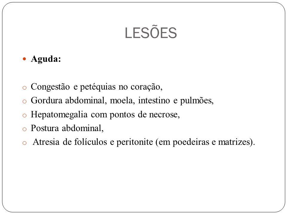 LESÕES Aguda: o Congestão e petéquias no coração, o Gordura abdominal, moela, intestino e pulmões, o Hepatomegalia com pontos de necrose, o Postura abdominal, o Atresia de folículos e peritonite (em poedeiras e matrizes).