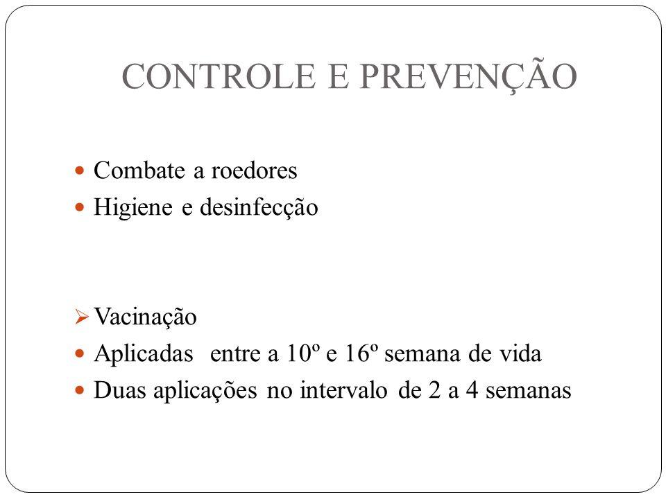 CONTROLE E PREVENÇÃO Combate a roedores Higiene e desinfecção  Vacinação Aplicadas entre a 10º e 16º semana de vida Duas aplicações no intervalo de 2 a 4 semanas