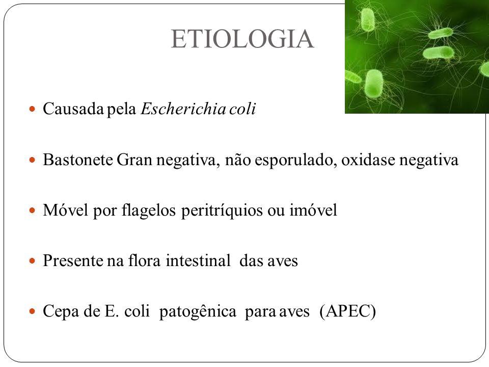ETIOLOGIA Causada pela Escherichia coli Bastonete Gran negativa, não esporulado, oxidase negativa Móvel por flagelos peritríquios ou imóvel Presente na flora intestinal das aves Cepa de E.